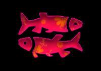 Značilnosti in zanimivosti Riba